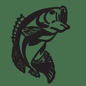 fish-web1